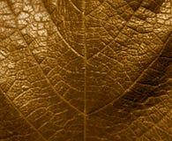 Gouden blad Stock Afbeelding