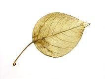 Gouden blad stock foto