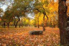 Gouden bladeren op tak, de herfsthout met zonstralen Royalty-vrije Stock Foto's