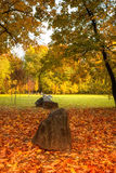 Gouden bladeren op tak, de herfsthout met zonstralen Stock Foto's