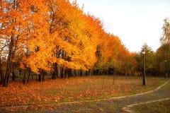 Gouden bladeren op tak, de herfsthout met zonstralen Royalty-vrije Stock Foto