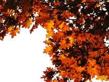 Gouden bladeren op wit stock afbeelding