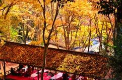 Gouden bladeren van de herfst, Takao Kyoto Japan Stock Foto's
