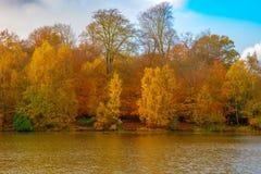 Gouden Bladeren van de Herfst royalty-vrije stock fotografie