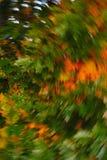Gouden bladeren van het eiken wervelen Stock Foto's