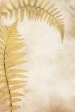 Gouden Bladschoonheid Stock Afbeelding