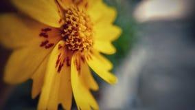 Gouden bloem Royalty-vrije Stock Foto's