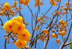 Gouden bloemen Royalty-vrije Stock Afbeeldingen