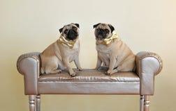 Gouden bogen Stock Fotografie