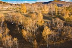 Gouden bomen in zonsondergang Royalty-vrije Stock Afbeelding