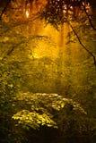 Gouden bos Royalty-vrije Stock Fotografie