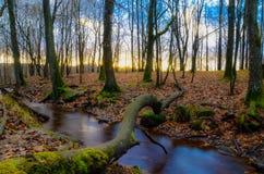 Gouden boslandschap Royalty-vrije Stock Foto