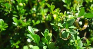 Gouden bruiloftringen die op groene tak hangen stock videobeelden