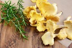 Gouden cantharel met rozemarijn Stock Fotografie
