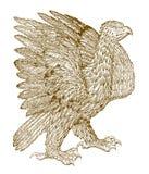 Gouden chrysaetos die van adelaarsaquila zijn vleugels uitspreiden stock illustratie