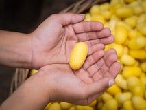 Gouden cocon op hand Stock Foto's