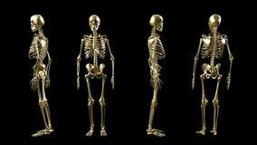 Gouden 3D geïsoleerd skelet Stock Afbeelding