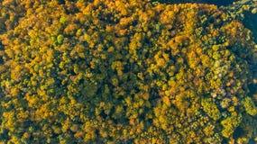 Gouden de herfstachtergrond, luchthommelmening van mooi boslandschap met gele hierboven bomen van royalty-vrije stock foto's