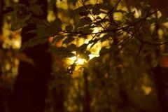 Gouden de herfstbladeren door zonlicht stock afbeelding