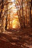 Gouden de herfstbos royalty-vrije stock foto's