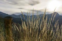 Gouden de herfstgras in de zon op een achtergrond van bergen Royalty-vrije Stock Afbeeldingen