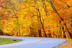 Gouden de herfstkromme Stock Afbeeldingen