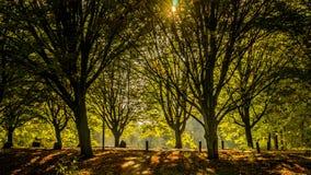 Gouden de winter lichte tegenover elkaar stellende schaduwen in het park Royalty-vrije Stock Afbeeldingen