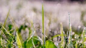 Gouden de winterzon op bevroren gras Royalty-vrije Stock Afbeelding