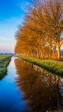 Gouden de winterzon op goud bevroren steeg van bomen dichtbij kanaal Royalty-vrije Stock Afbeeldingen