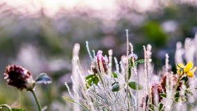Gouden de winterzon op recent de herfstgebladerte en gras Royalty-vrije Stock Fotografie