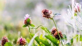 Gouden de winterzon op recent de herfstgras en recente bloemen Royalty-vrije Stock Foto