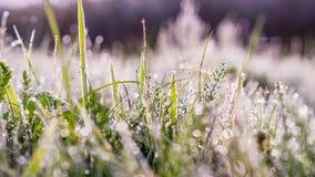 Gouden de winterzon op recent de herfstgras en recente bloemen Royalty-vrije Stock Foto's
