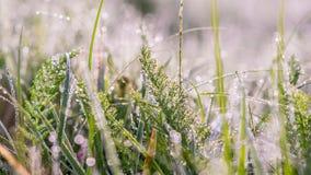 Gouden de winterzon op recent de herfstgras en recente bloemen Stock Foto