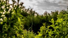 Gouden de winterzon op recente de herfst groene bladeren en recente bloemen Stock Fotografie