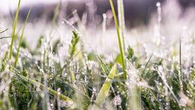 Gouden de winterzon op recente de herfst groene bladeren en recente bloemen Royalty-vrije Stock Foto's