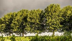 Gouden de winterzon op treess in het naderen van onweer Royalty-vrije Stock Afbeeldingen