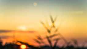 Gouden de winterzon op wazig gras Royalty-vrije Stock Foto