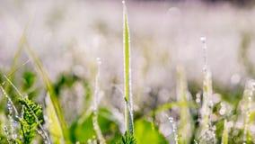 Gouden de winterzon op wazig gras Royalty-vrije Stock Afbeelding