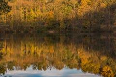 Gouden die gebladerte in water wordt weerspiegeld stock fotografie