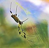 Gouden die Orb spin op zijn Web in Costa Rica wordt opgeschort stock afbeeldingen
