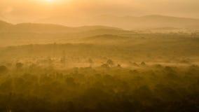 Gouden die wildernis in Sri Lanka door de ochtendzon wordt aangestoken stock afbeeldingen