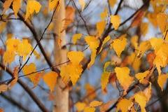 Gouden doorbladert Stock Foto's