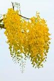 Gouden douchebloemen stock afbeeldingen
