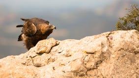 Gouden Eagle op een rots Royalty-vrije Stock Afbeelding