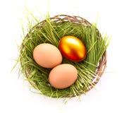 Gouden ei in geïsoleerd nest stock foto