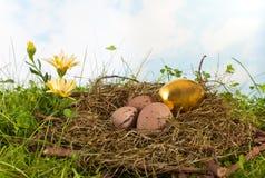 Gouden ei in nest Stock Afbeeldingen