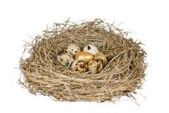 Gouden ei in nest Stock Foto's