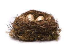 Gouden eieren in een nest Royalty-vrije Stock Foto's