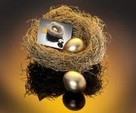 Gouden eieren in nest stock foto