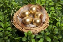 Gouden eieren op gras Stock Foto